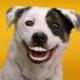 Frisco Dentist Shares Tips for Pet Dental Health Month